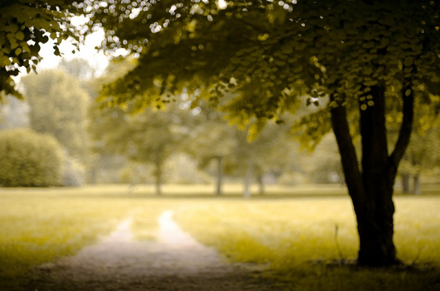Path of memory: Guelph Arboretum, by Mark Su