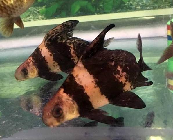 New Jersey Scuba Diving