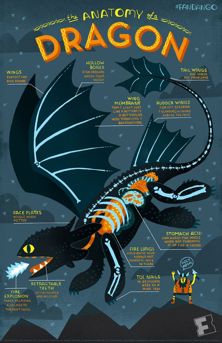 Toothless infographic for How to Train Your Dragon 2 illustrated by Rachel Ignotofsky