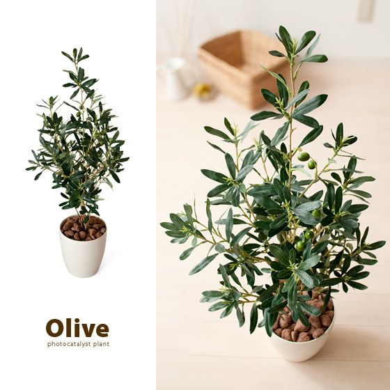 エア・リゾーム インテリア / 光触媒人工植物 Olive 〔オリーブ〕 グリーン