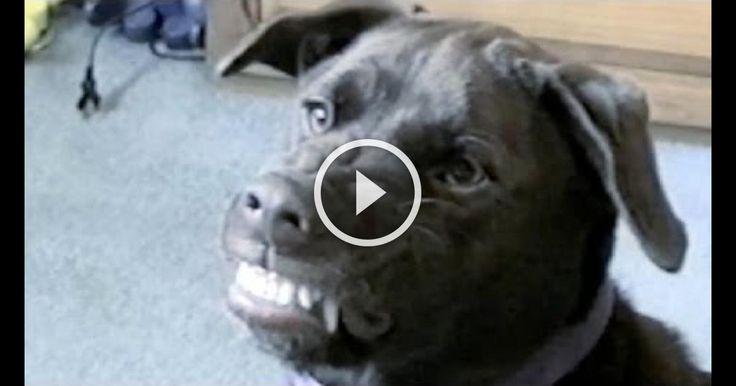 Funny Animal Compilation: Best Of Petsami
