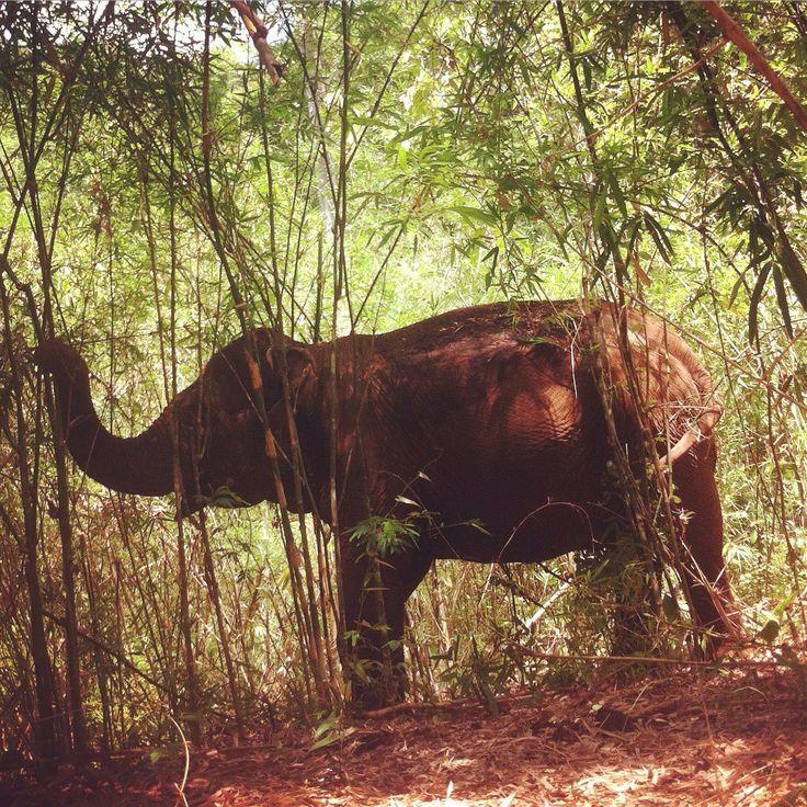 The Mondulkiri Project - Elephant Sanctuary in Cambodia