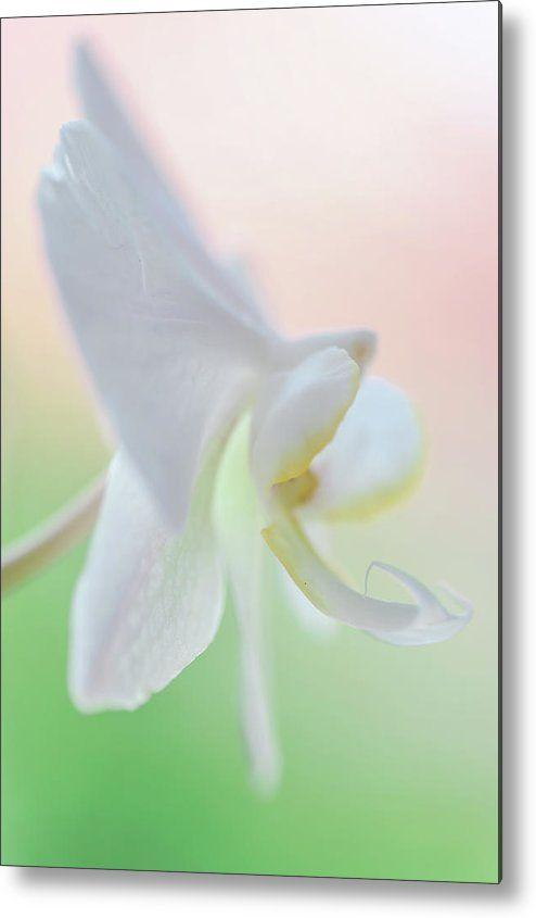 White Orchid Macro 1. Series Elegance Metal Print by Jenny Rainbow.  All metal prints are professionally printed, packaged, and shipped within 3 - 4 business days and delivered ready-to-hang on your wall. Choose from multiple sizes and mounting options.