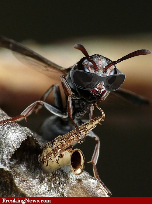The Jazz Wasp Playing a Saxophone | Music | Pinterest ...