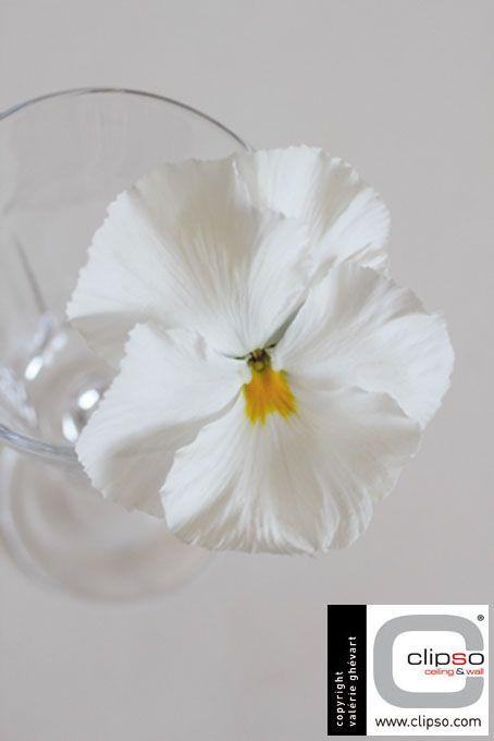 Photographie de fleurs par Valérie Ghévart