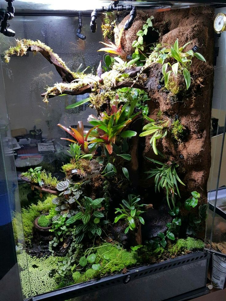 Cnidarian as well Indoor Garden Lights furthermore Ao Yai as well 300756081337234685 furthermore Autopot Mini Smart Pot. on growing orchids in fish tank