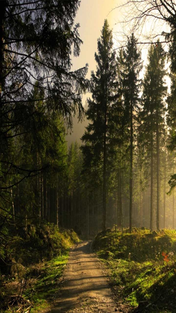 Nature Forest Wallpaper Android Download Forest Wallpaper Nature Iphone Wallpaper Phone Wallpaper Forest nature phone wallpaper
