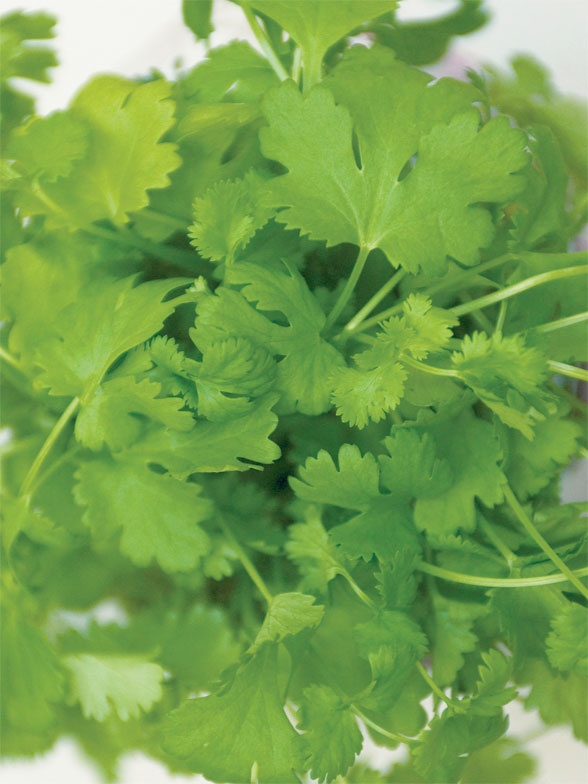 Add cilantro to your herb garden --> http://blog.hgtvgardens.com/herbivore-love-it-or-hate-it-cilantro-has-staying-power/?soc=pinterest