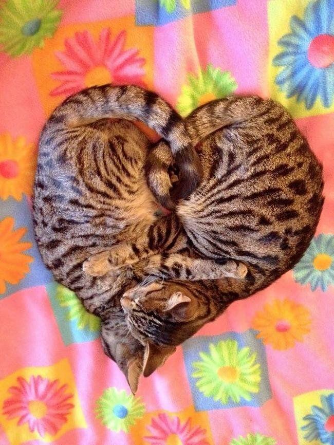 21 animali addormentati nei posti e nei modi più strani. #funny #animals