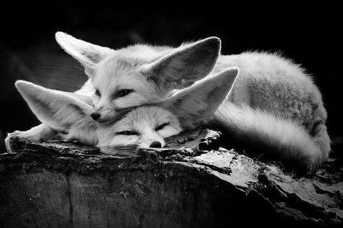 The happy couple by Inna Blar