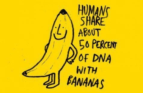 Human share about 50% of DNA with Bananas. | DNA 3 Fun ...