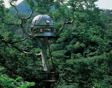"""Perched high in the forest of Okinawa is a unique creation by master Japanese treehouse builder Taka, author of Treedom: The Road to Freedom. The """"Plexiglass portal to the universe"""" is an attraction at the rustic Beach Rock resort, a popular stopover for young Japanese backpackers and those who want to get away from the ordinary for a while. The treehouse was built in 2005, and weathered a typhoon the following season.: Forests, Dreams, Okinawa Japan, Glasses, Trees Houses, Treehouse, Okinawajapan, Beaches Rocks, Outer Spaces"""