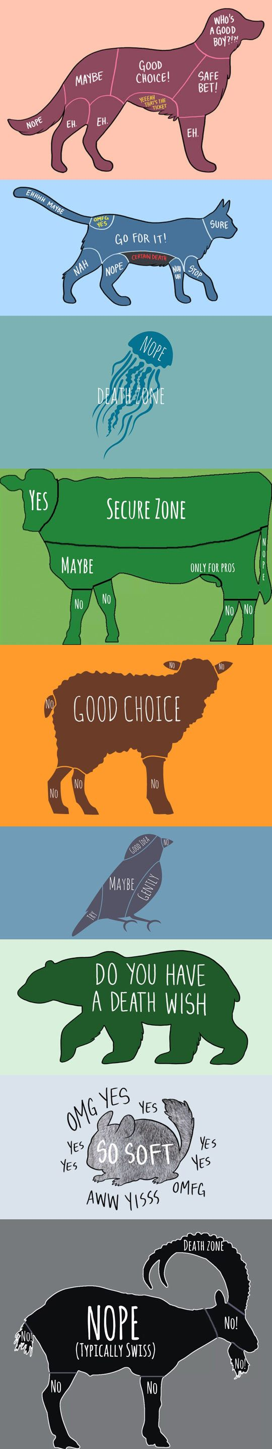 The Right Way To Pet Animals