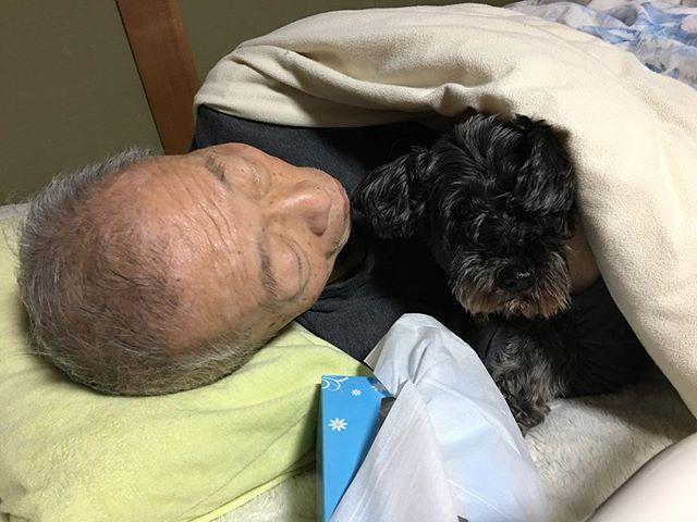 ほぼ寝たきりになってしまった実家父。 ベルを連れて行くと、一緒に寝たがります。 ベルは内心イヤイヤながらも、じっと布団にくるまってくれてます。 * ありがとね、ベル❤️ * * #ポメラニアン #保護犬 #里親 #愛犬 #殺処分反対 #犬のいる暮らし  #犬のいる生活 #dogstagram #dog #シニア犬 #老犬 #ミニチュアシュナウザー #元保護犬 #黒シュナ #miniatureschnauzer #pomeranian #保護犬保護猫カフェ川西店 #ラブファイブ #秘密結社老犬倶楽部 #保護犬カフェ卒業生