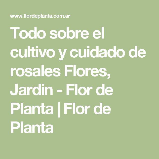 Todo sobre el cultivo y cuidado de rosales Flores, Jardin - Flor de Planta | Flor de Planta