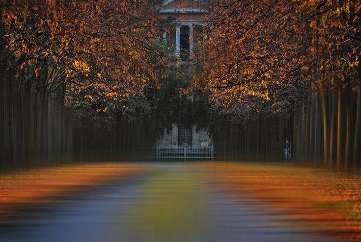 Image result for silena lambertini photography