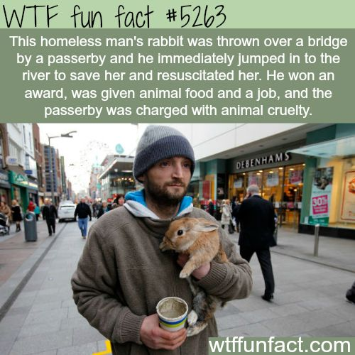 "Homeless man jumps off bridge, into a river to SAVE his rabbit - ""@$$hole passerby"" gets his just dues"" KARMA!  ~WTF fun facts"