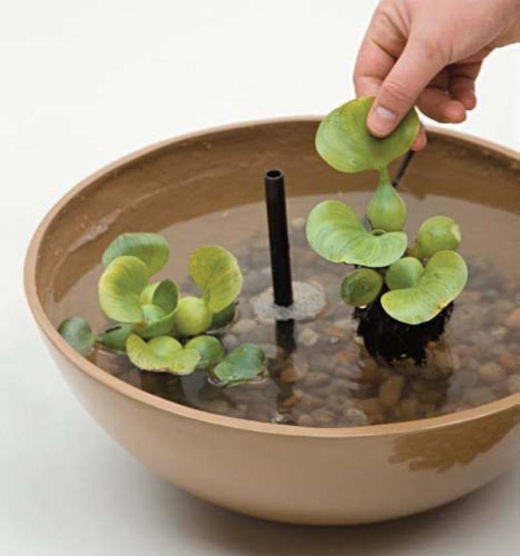 Delicadamente, coloque as mudas da planta aquática. A escolhida foi o aguapé (Eichhornia crassipes). Depois, ligue o motor na tomada e ajuste o fluxo de água do chafariz.