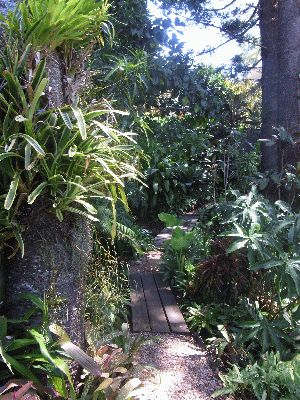 Cool, shaded and very natural, precarious steps and paths lead down into the forest.