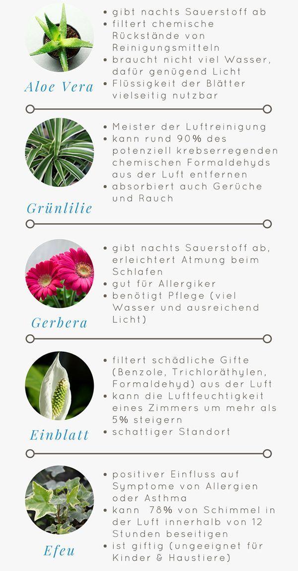Tipps Fur Ein Gutes Raumklima Idealclean Blog Raumklima Pflanzideen Pflanzen Zimmer