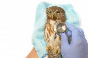 Jak vybrat veterinárního lékaře?
