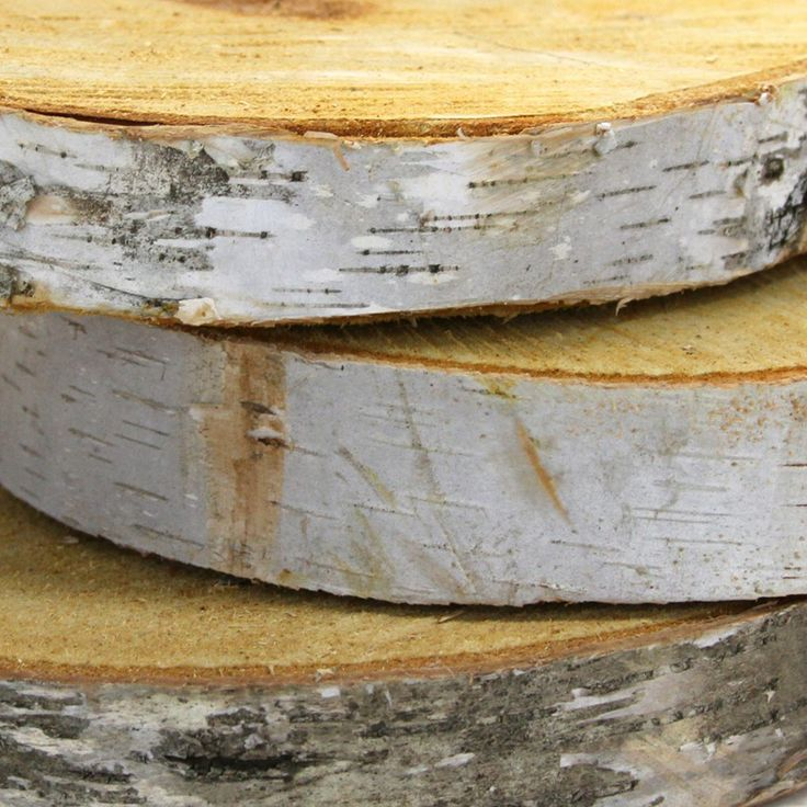 8 Birch Tree Wood Slab Centerpiece Slice Wholesale Wedding Supplies Discount Favors Party And Bulk E