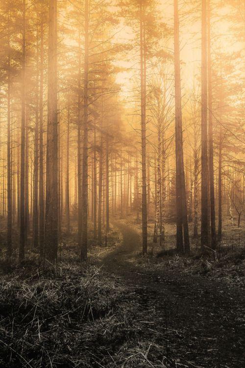 lsleofskye: Monochromic Forest