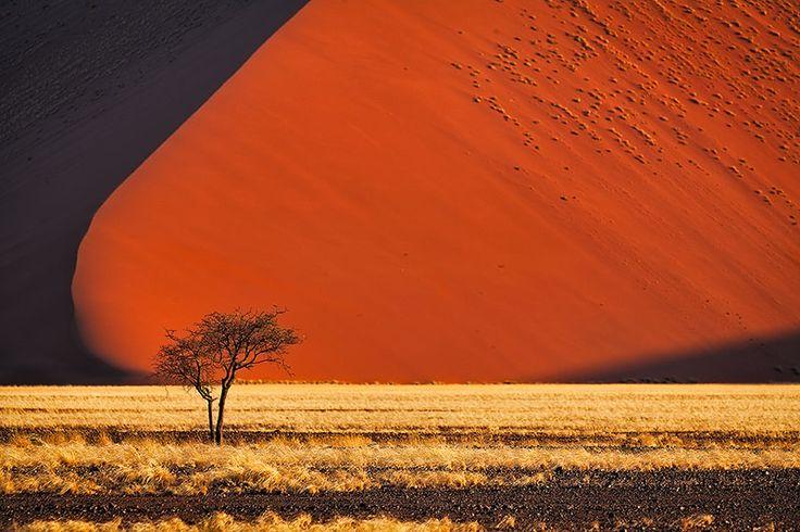 Tree-By-Namibia-Dunes.jpg (800×533)