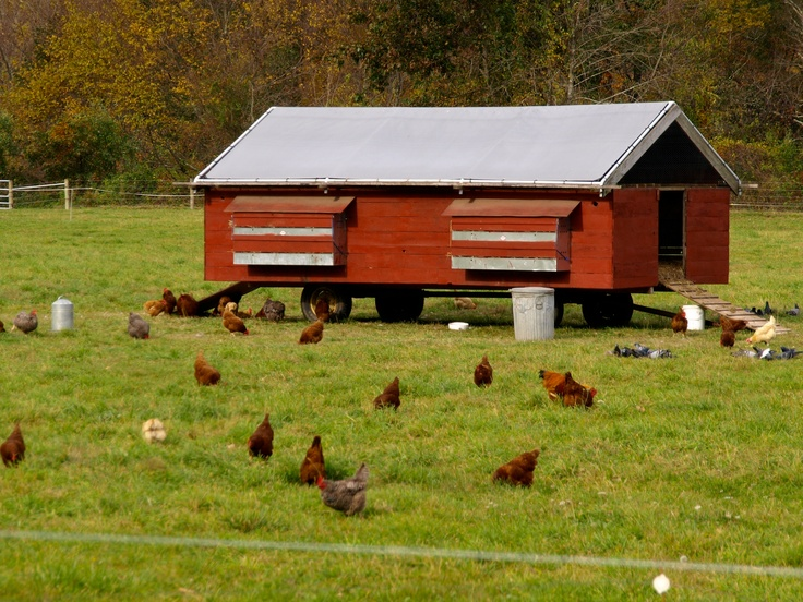 Egg mobile picture enlarges nicely to view details for Free range chicken coop plans