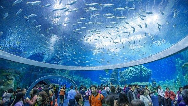 ©珠海長隆海洋王国 今年の初め、マカオに隣接する広東省珠海市・横琴島に「世界最大」の水族館が誕生しました。広東省、香港、マカオの合同事業として開発された「珠海長隆海洋王国」。さて、その全容はどんなものなのでしょう?©Guinness Wo