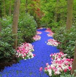 WOW!!!  That's the word you would utter probably after seeing this fantastic floral display. Wanna know where it is located?  Well, the stunning landscape is a part of Keukenhof, which is also known as the Garden of #Europe. There's even more surprises – it is the world's largest flower garden.  Fly to #Amsterdam and take a bus from Schiphol to reach the small town of Lisse in the Netherlands, where Keukenhof is located.  #travel #holidays #mustseeplaces