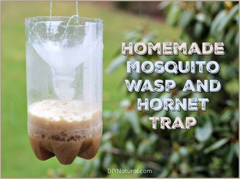 Best 20 Mosquito Trap Homemade Ideas On Pinterest
