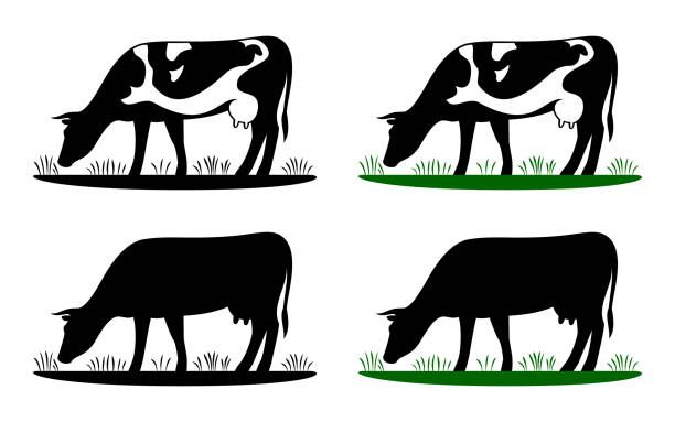Cow Illustrations Royalty Free Vector Graphics Clip Art Istock Cow Illustration Free Vector Graphics Cow Photos