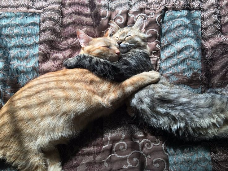 Shelter Kitty Won't Let Go of Her Best Friend When She is Adopted, A Week Later..