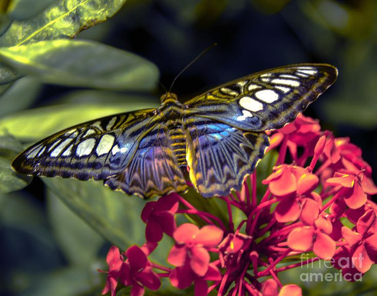 The Fall Butterfly Photograph by Amanda Sinco