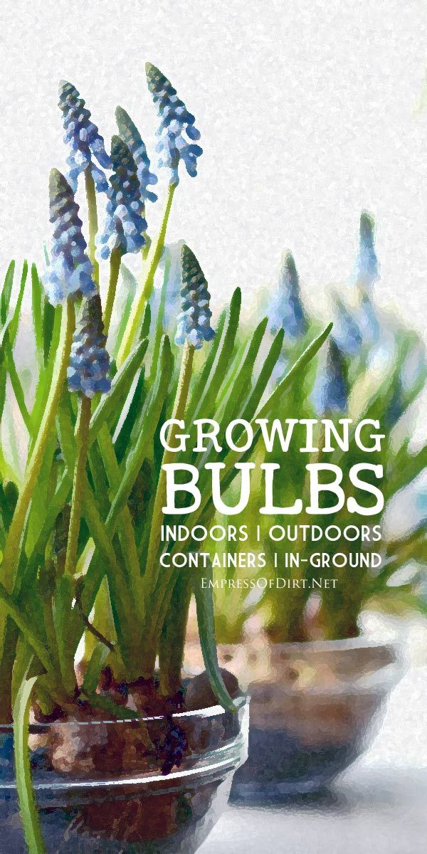 This resource guide for growing flowering bulbs includes forcing bulbs indoors, and planting outdoors in both containers and the ground