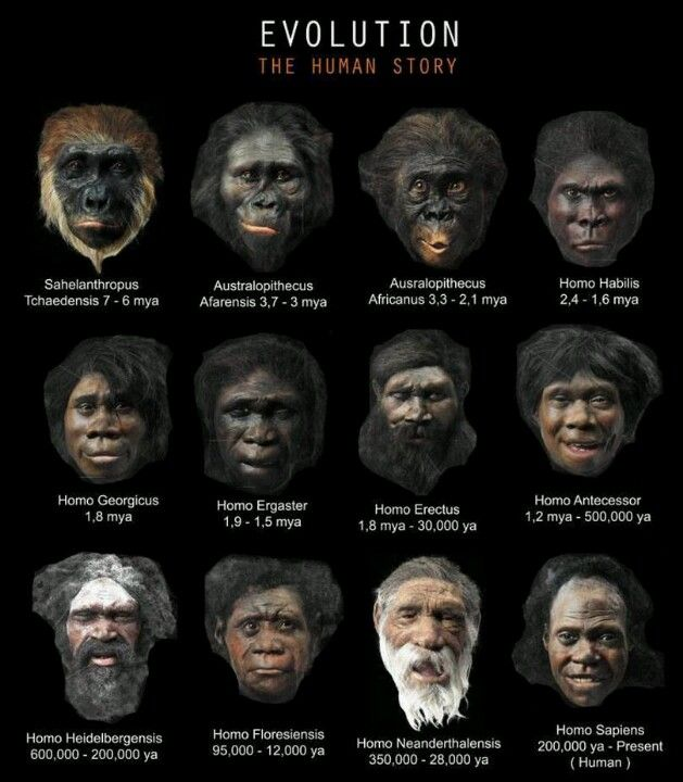 Evolution is fact... Creationism is denial of the facts! I'm guessing people such as yourselves never go to the Smithsonian or any such place. You may have to learn something other than what your bible tells you. Kind of like you insane bible thumpers went after me in that fucking apartment!