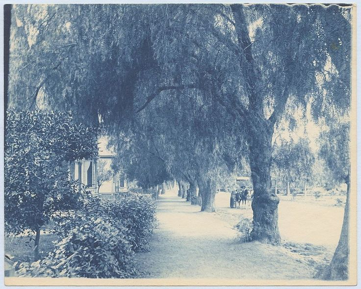 Southern California CA Residential Street Lined with Trees 1890s Cyanotype Photo