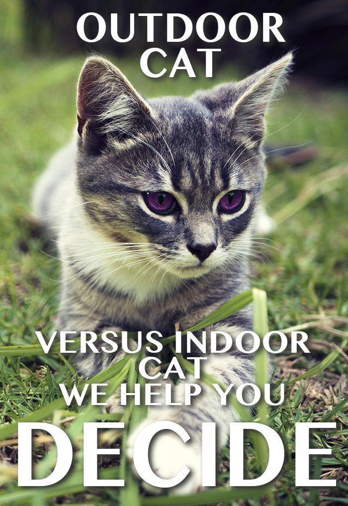 Outdoor Cat Versus Indoor Cats Cat Site Outdoor Cats Cats Outside