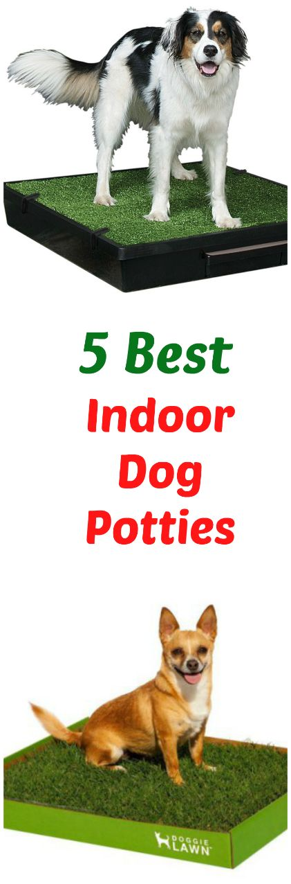 Dog potties are a good option for all pet owners, but especially for those who are really busy, have unpredictable schedules or live where it is often hot, cold or wet. There are lots of dog potty systems available. But after doing a ton of research, I think these five dog potties are five of the best indoor dog potties available in the market today and the ones I recommend you try. ... see more at PetsLady.com ... The FUN site for Animal Lovers