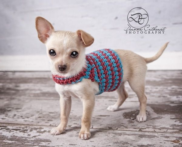 Super easy crochet Chihuahua sweater - link to free pattern by maxine