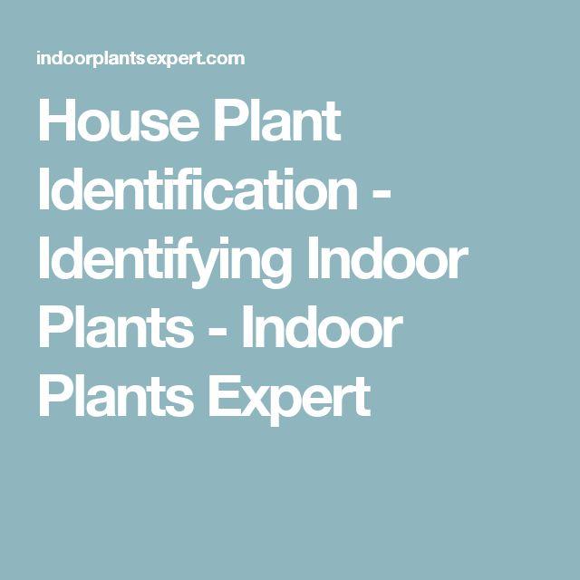 House Plant Identification - Identifying Indoor Plants - Indoor Plants Expert