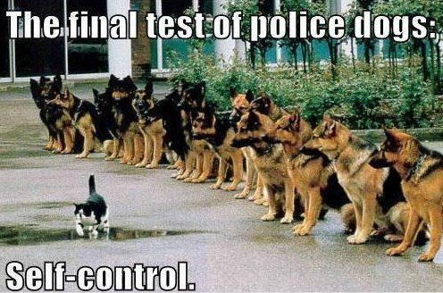 Police Dogs - www.meme-lol.com