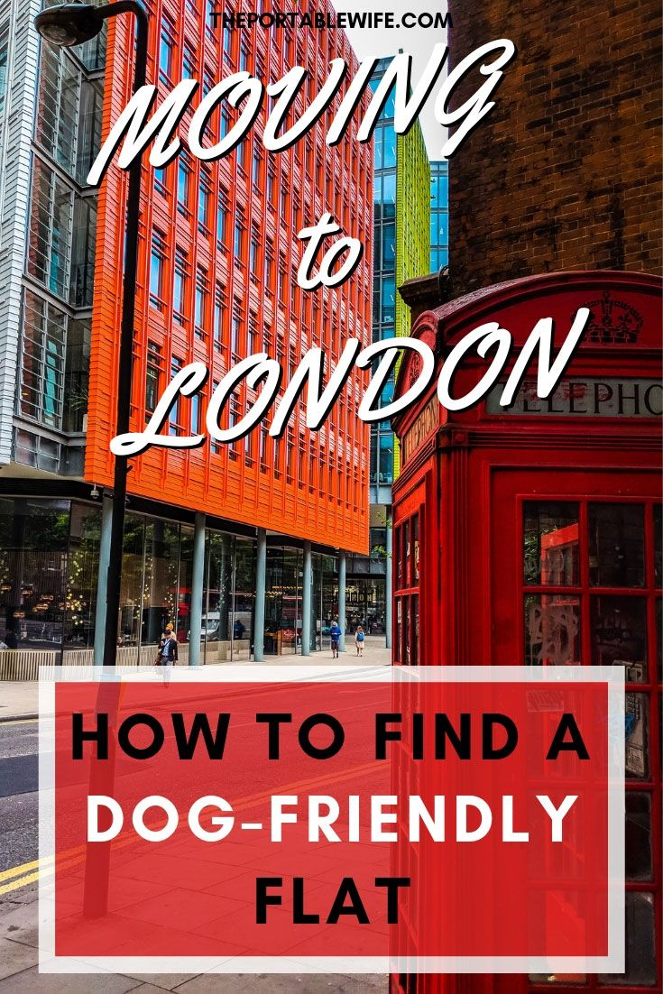 Renting In London With A Dog What You Should Know Rent In London Moving To The Uk London
