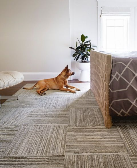 Our Fully Barked FLOR carpet squares are stylish, comfy, and dog approved.