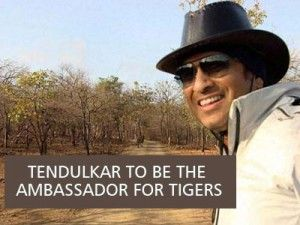 Tendulkar to be the ambassador for tigers in sanctuaries in India