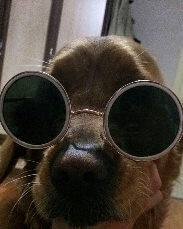 #goldenretriever #dogs #fun