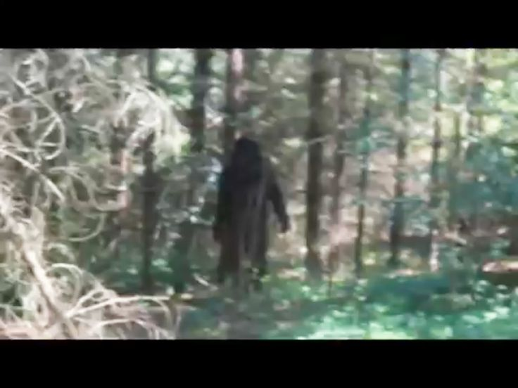 Brave 9 year Old native boy sneaks with in ten yards of Sasquatch and takes 3 pictures of it, while it gets up and walks towards him.