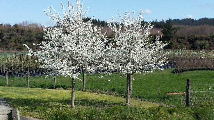 1000 Images About My Perfect Farm On Pinterest Trees