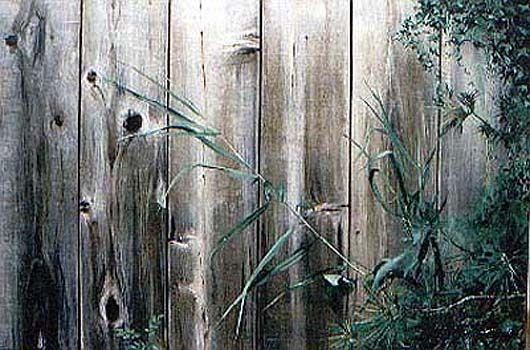 La valla de madera    óleo
